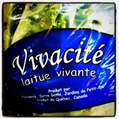 expat-quebec-canada-laitue-vivante-supermarche